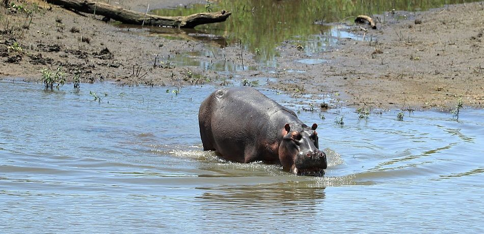 Kenya's Rift Valley Site Of Two Separate Lethal Hippo Attacks