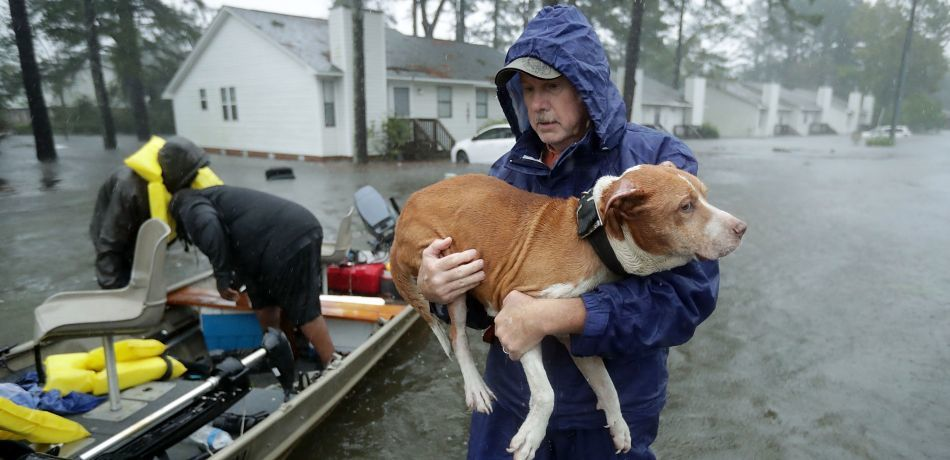 Good Samaritan Tammie Hedges, Who Took In Pets During Hurricane Florence, Arrested For Caring For The Animals