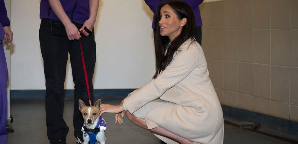 Meghan, the Duchess of Sussex meets a Jack Russell called 'Minnie' during her visit to the Mayhew, an animal welfare charity on January 16, 2019 in London, England. This will be Her Royal Highnesses first official visit to Mayhew in her new role as Patron.